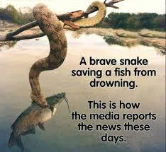 mediaimages