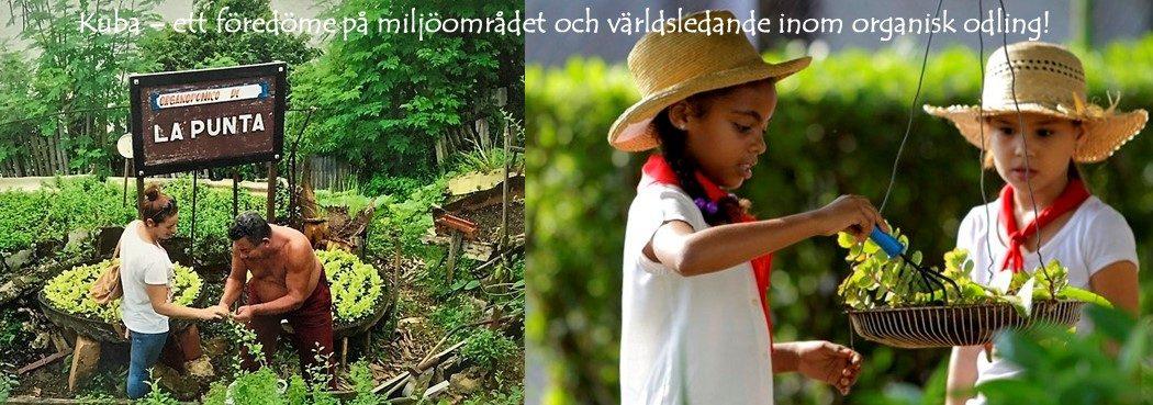 Bild miljö