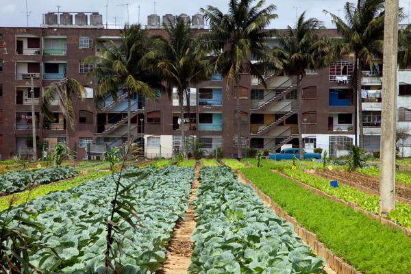 Urban_agriculture2