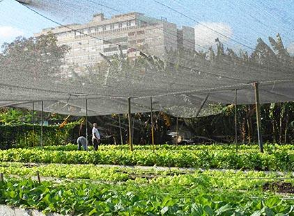 Stadsjordbruk_kuba